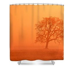 Oak At Sunrise Shower Curtain by Greg Vaughn - Printscapes