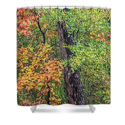 Oak Hickory Woodland Shower Curtain by Tim Fitzharris