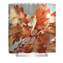 Oak Leaves In Autumn Shower Curtain by Wilhelm Hufnagl