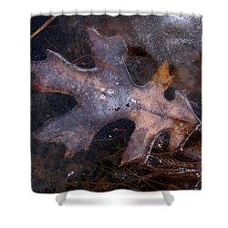 Oak Preservation Shower Curtain by Adam Long