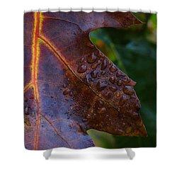 Oak Tears Shower Curtain