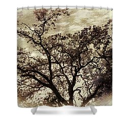 Shower Curtain featuring the photograph Oak Tree by Athala Carole Bruckner