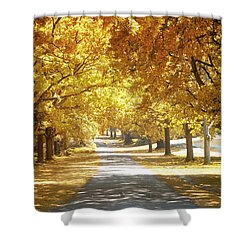 Oak Tree Avenue In Autumn Shower Curtain