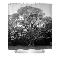Oak Tree Shower Curtain by David Lee Thompson