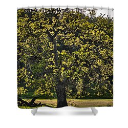 Oak Tree New Green Leaves Shower Curtain