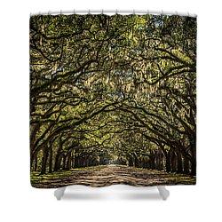 Oak Tree Tunnel Shower Curtain