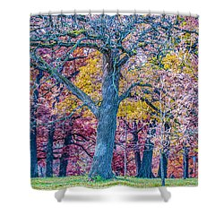 Oak Trees At Fall Shower Curtain