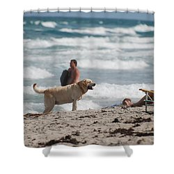 Ocean Dog Shower Curtain by Rob Hans
