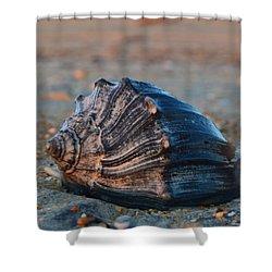 Ocean Treasures Shower Curtain