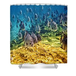 Oceans Below Shower Curtain