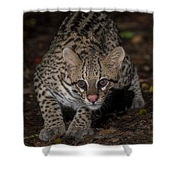 Ocelot #1 Shower Curtain by Wade Aiken