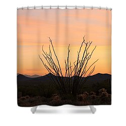 Shower Curtain featuring the photograph Ocotillo At Sunset  by Christy Pooschke