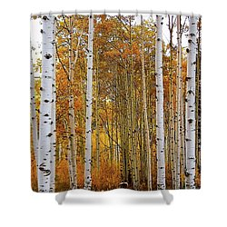 October Aspen Grove  Shower Curtain