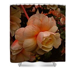 Vintage Begonia No. 2 Shower Curtain by Richard Cummings