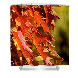 October Oak Leaves Shower Curtain by Brian Chase