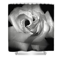 Shower Curtain featuring the photograph October Rose by Donna Kennedy