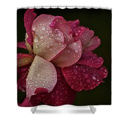 October Rose In The Rain Shower Curtain by Richard Cummings