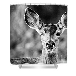 Oh, Deer, Black And White Shower Curtain