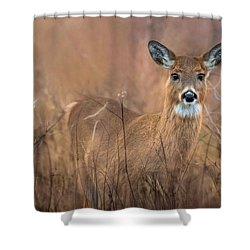 Shower Curtain featuring the photograph Oh Deer by Robin-Lee Vieira