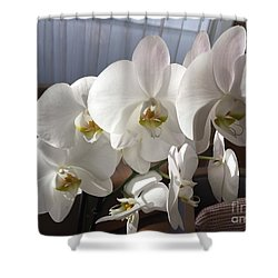 Oh Those Orchids Shower Curtain