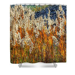 Ohio Country Roads - Roadside Beach Grass In Early Morning Light - Ashtabula County Shower Curtain