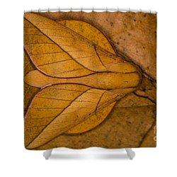 Shower Curtain featuring the photograph Oiticella Convergens Moth by Gabor Pozsgai