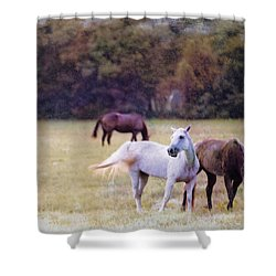 Ok Horse Ranch_1c Shower Curtain