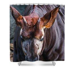 Okapia Shower Curtain