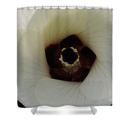 Okra Blossom Shower Curtain by Randy Bodkins