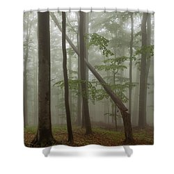 Old Beech Forest Shower Curtain by Evgeni Dinev