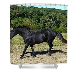 Shower Curtain featuring the digital art Old Black Horse Running by Jana Russon