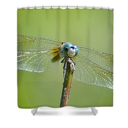 Old Blue Eyes - Blue Dragonfly Shower Curtain by Bill Cannon