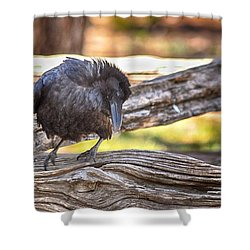 Old Crow Shower Curtain