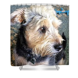 Old Dogs Rock Shower Curtain