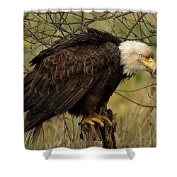 Old Eagle Shower Curtain