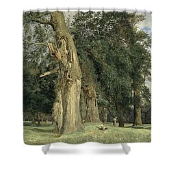 Old Elms In Prater Shower Curtain by Ferdinand Georg Waldmuller