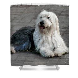 Shower Curtain featuring the photograph Old English Sheepdog by John  Kolenberg