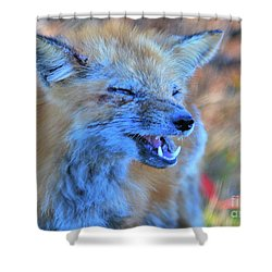 Shower Curtain featuring the photograph Old Fox by Debbie Stahre
