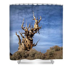 Shower Curtain featuring the photograph Old Friend by Sean Foster