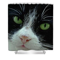Old Green Eyes Shower Curtain by DigiArt Diaries by Vicky B Fuller
