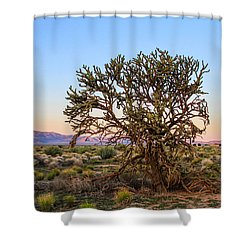 Old Growth Cholla Cactus View 2 Shower Curtain