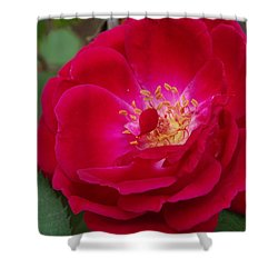 Old Homestead Rose Shower Curtain