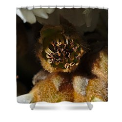 Old Loquat Tree Flower Shower Curtain