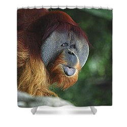 Old Man Of The Forest Shower Curtain