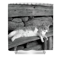 Shower Curtain featuring the photograph Old Mill Cat by Sandi OReilly