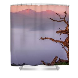 Old Oak And Mt. Diablo On A Foggy Morning Shower Curtain by Marc Crumpler