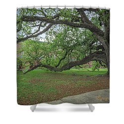 Shower Curtain featuring the photograph Old Oak Tree by Gregory Daley  PPSA