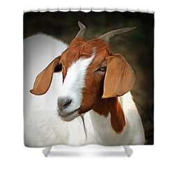 Shower Curtain featuring the photograph Old Red by Marion Johnson
