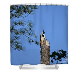 Shower Curtain featuring the photograph Old Red by Skip Willits