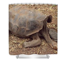 Old Tortoise Shower Curtain